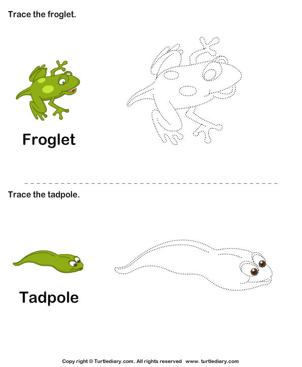 Trace the stages of the frog life cycle