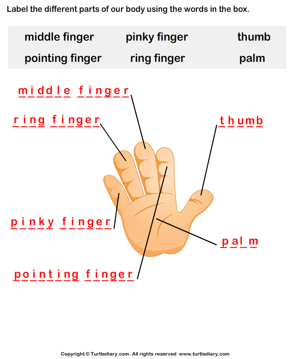 Related Pictures body parts puzzle printable for preschool make money ...