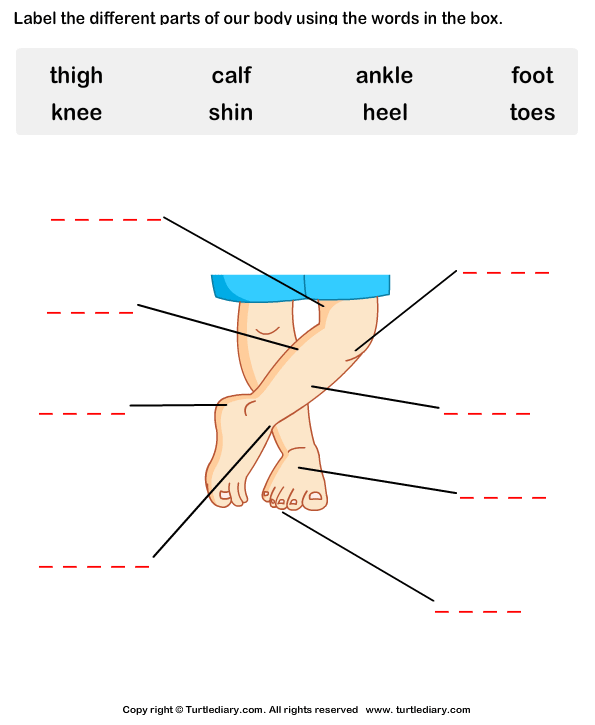 Label The Body Parts Worksheet 4 - Turtle Diary
