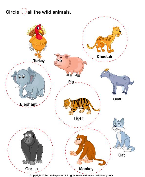 Identify wild animals Answer