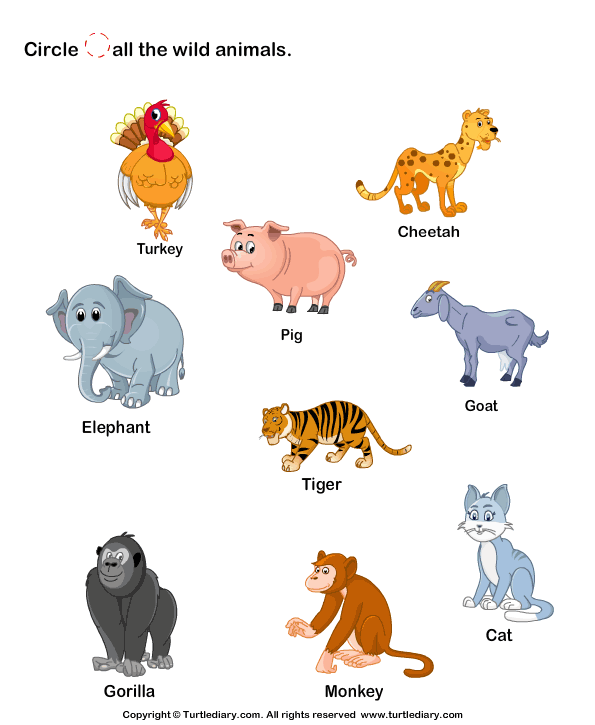 Identify Wild Animals 1 Worksheet - TurtleDiary.com