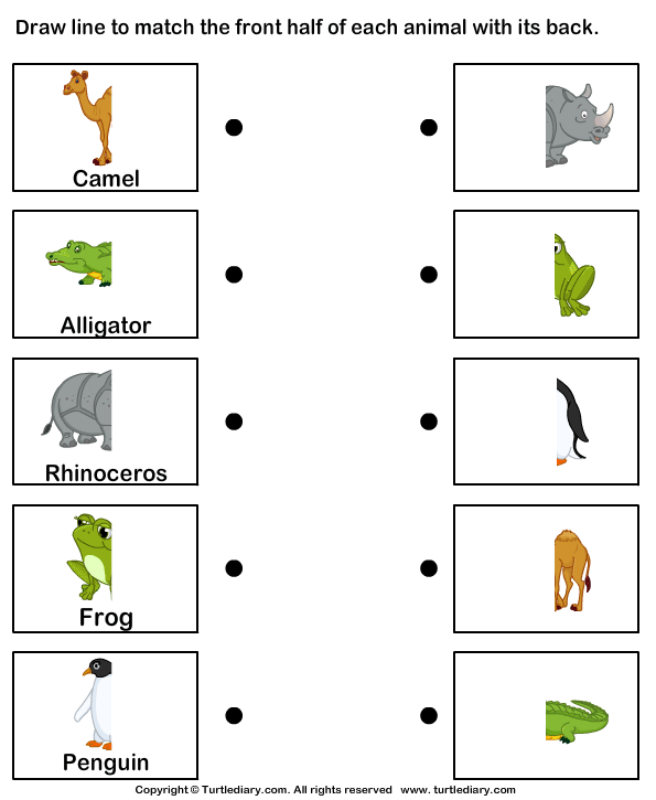 Match Animal Body Parts Worksheet 4 - Turtle Diary