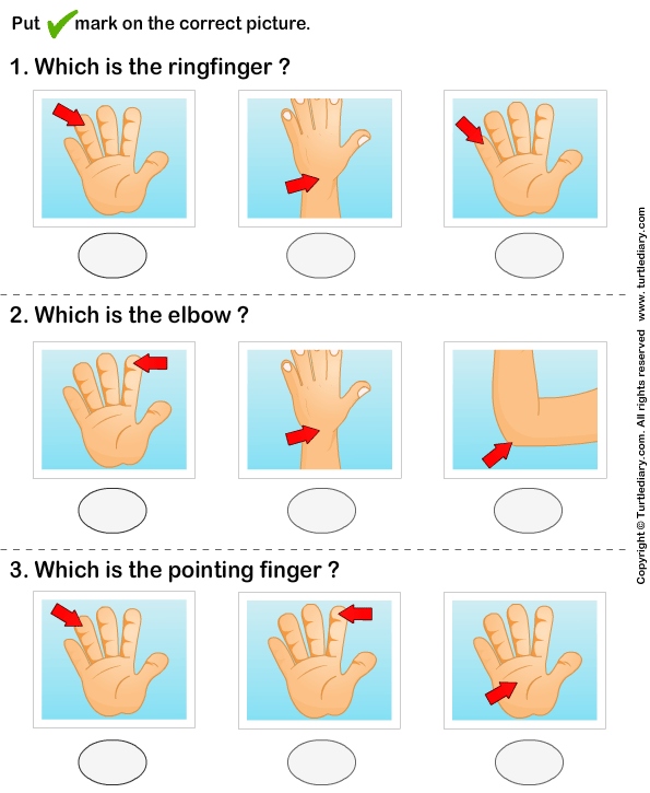 Identify parts of human hand