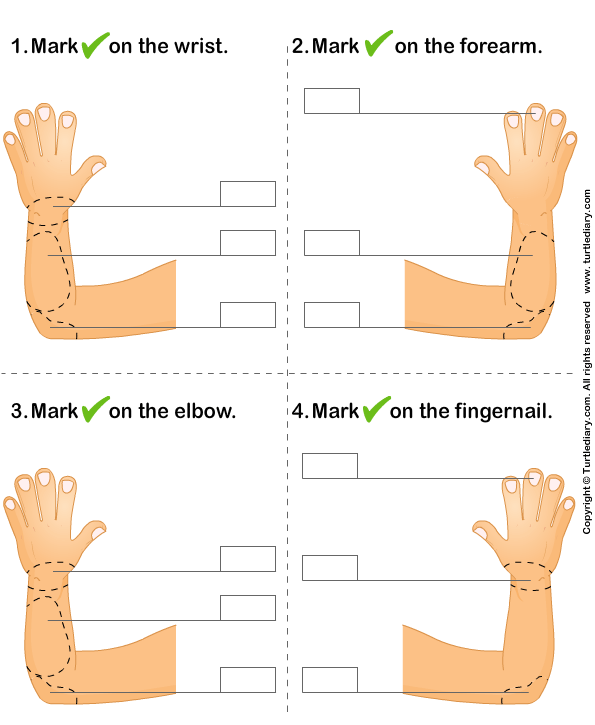Identify Parts Of Human Hand Worksheet 4 - Turtle Diary