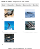 Write the Names of Water Mammals - animals - First Grade
