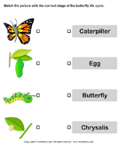Butterfly Life Cycle: Match Pictures with Correct Name - animals - Kindergarten