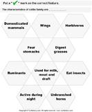 Cattle Characteristics