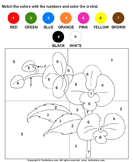 Color the Orchid by Numbers