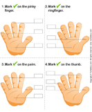 Identify Parts of Human Hand - the-human-body - Preschool