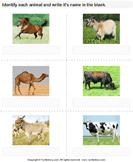 Write the Names of Cattle - animals - First Grade