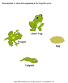 Sequence the Stages of Frog Life Cycle - animals - Kindergarten