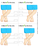 Identify Parts of Human Leg - the-human-body - Preschool